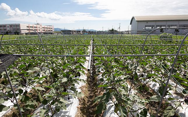 関西近郊の生産者との幅広いネットワークが多彩かつ新鮮な青果の安定供給を実現。